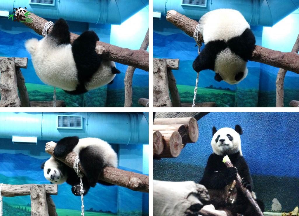 照片由Taipei Zoo提供