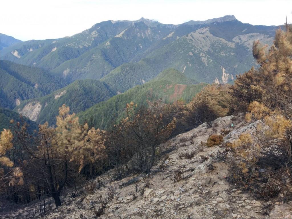 玉山事業區第52森林火災現場。(照片由林務局提供)