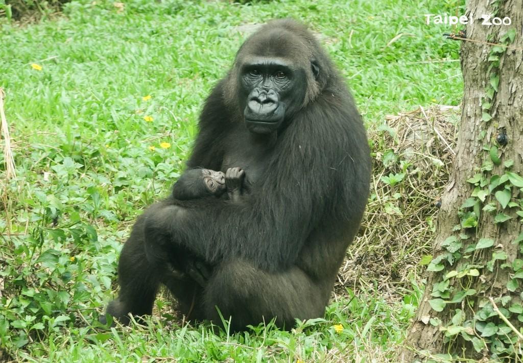 照片來源:Taipei Zoo