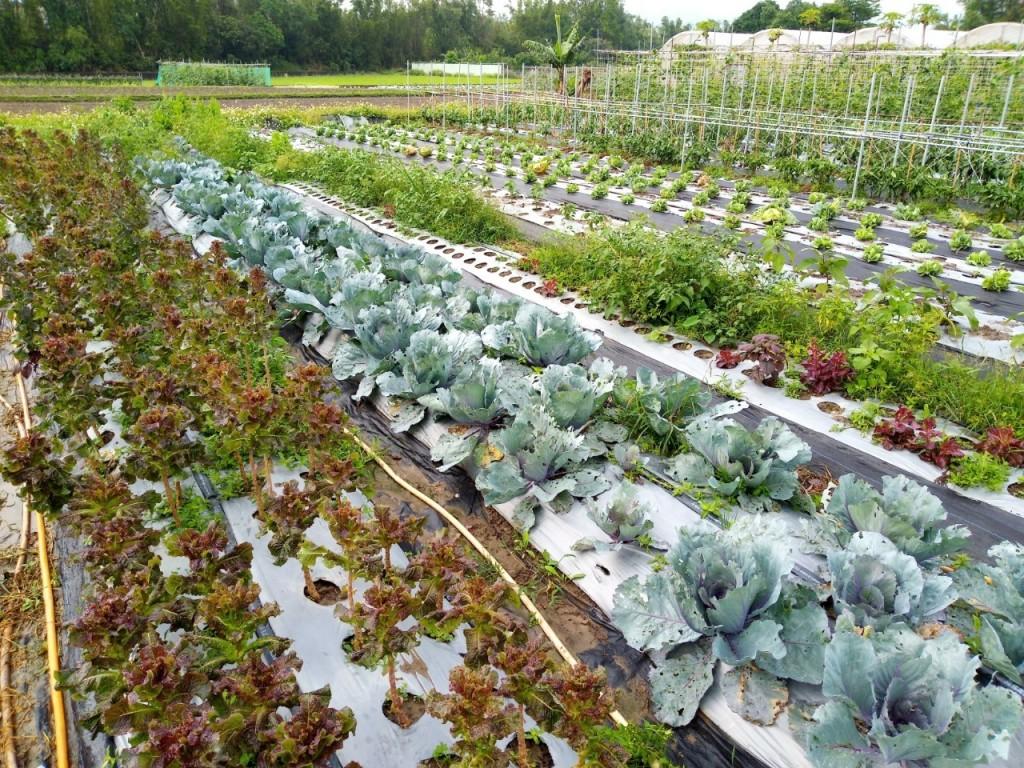 照片由新北市政府農業局提供