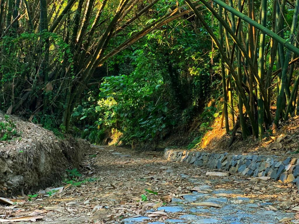 石牌坑生態步道採透水、多孔隙、自然材料修築,保留了豐富的自然生態和地理景觀。(照片由行政院農業委員會水土保持局提供)