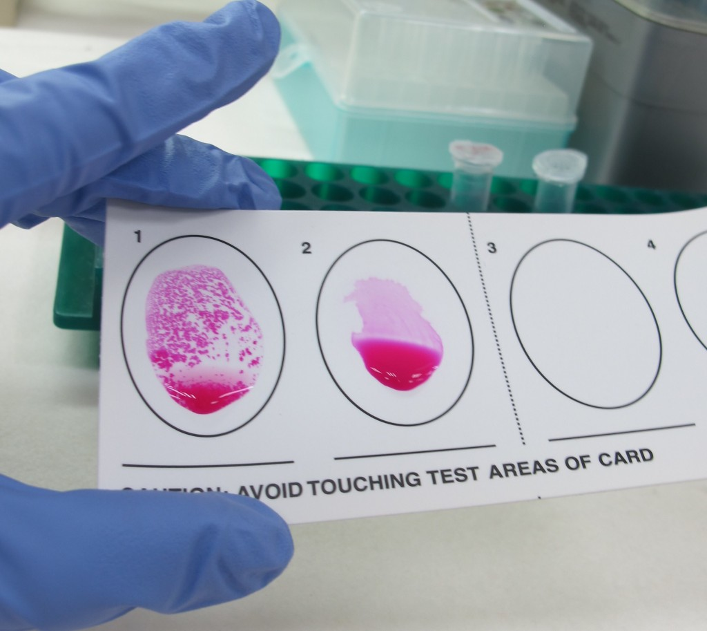 帶毛小孩到紐西蘭澳洲免煩惱 台灣畜衛所提供犬布氏桿菌抗體檢測