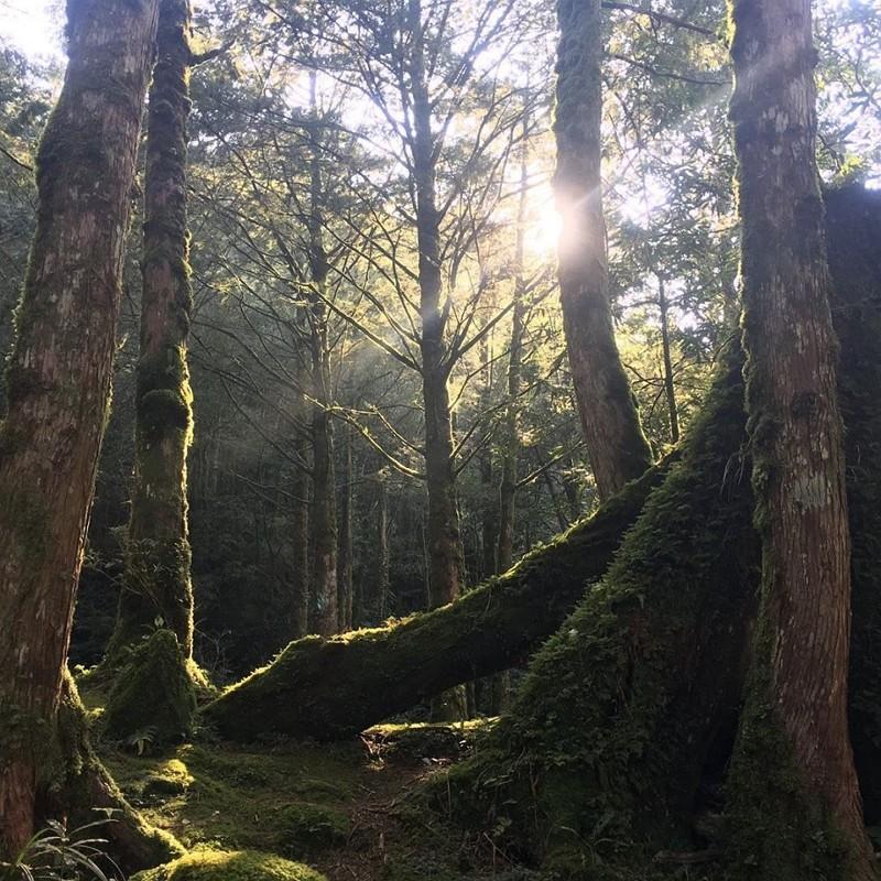 微解封 到力麗馬告園區森呼吸