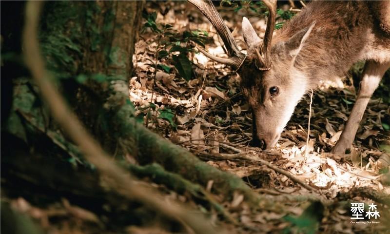 Wildlife reclaiming outdoors amid COVID curbs in Taiwan