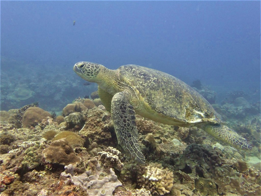 Taiwanese turtle expert urges people to consider ocean pollution