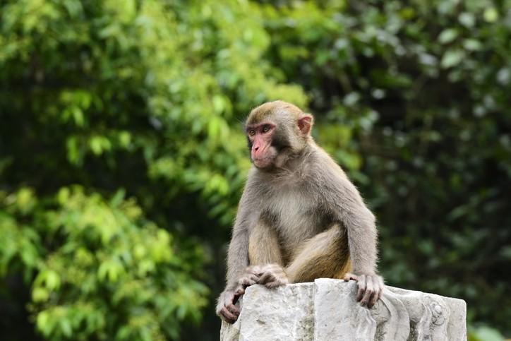 中國發現首例人類感染猴傳播的皰疹B病毒病例,患者為北京一名53歲男性獸醫。(示意圖/Getty Images)