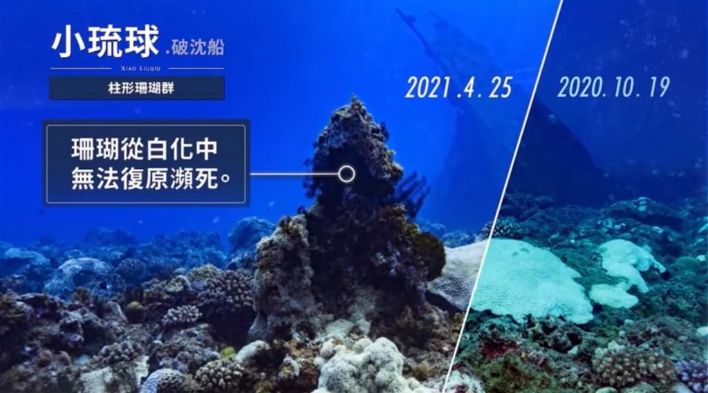 海洋環境健康指標!綠色和平示警珊瑚白化危機 呼籲正視氣候緊急情況