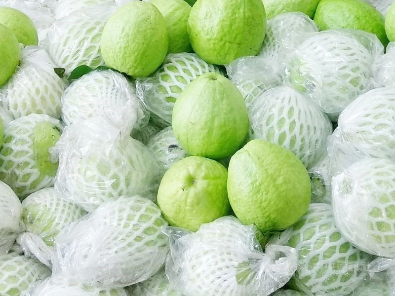 Kaohsiung City is promoting its guavas in Singapore.