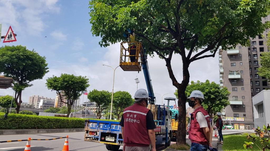 烟花颱風影響北台  新北市修樹整備減少災害發生