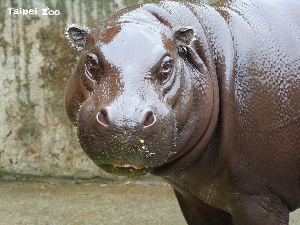 台北市立動物園今(1)日起採預約制入園,每日開放3,600名額(圖/台北市立動物園)
