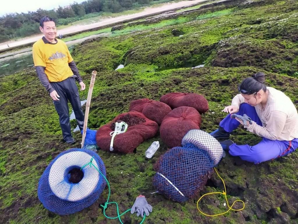 漁民採集石花菜