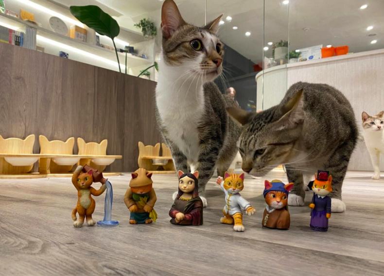 貓咪也瘋狂公益協會待認養浪浪與「屬於你的貓美術館」公仔合影(圖/主辦單位)