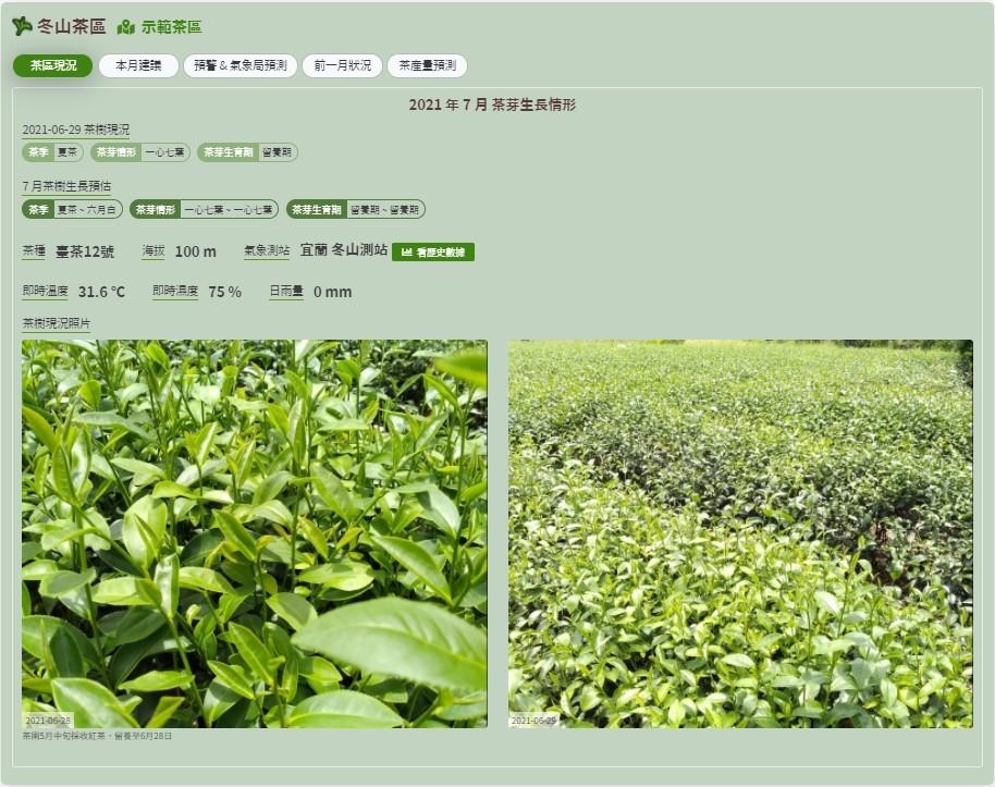 臺灣茶葉生產管理資訊平台-示範茶區茶樹現況資料。(圖片由茶業改良場提供)