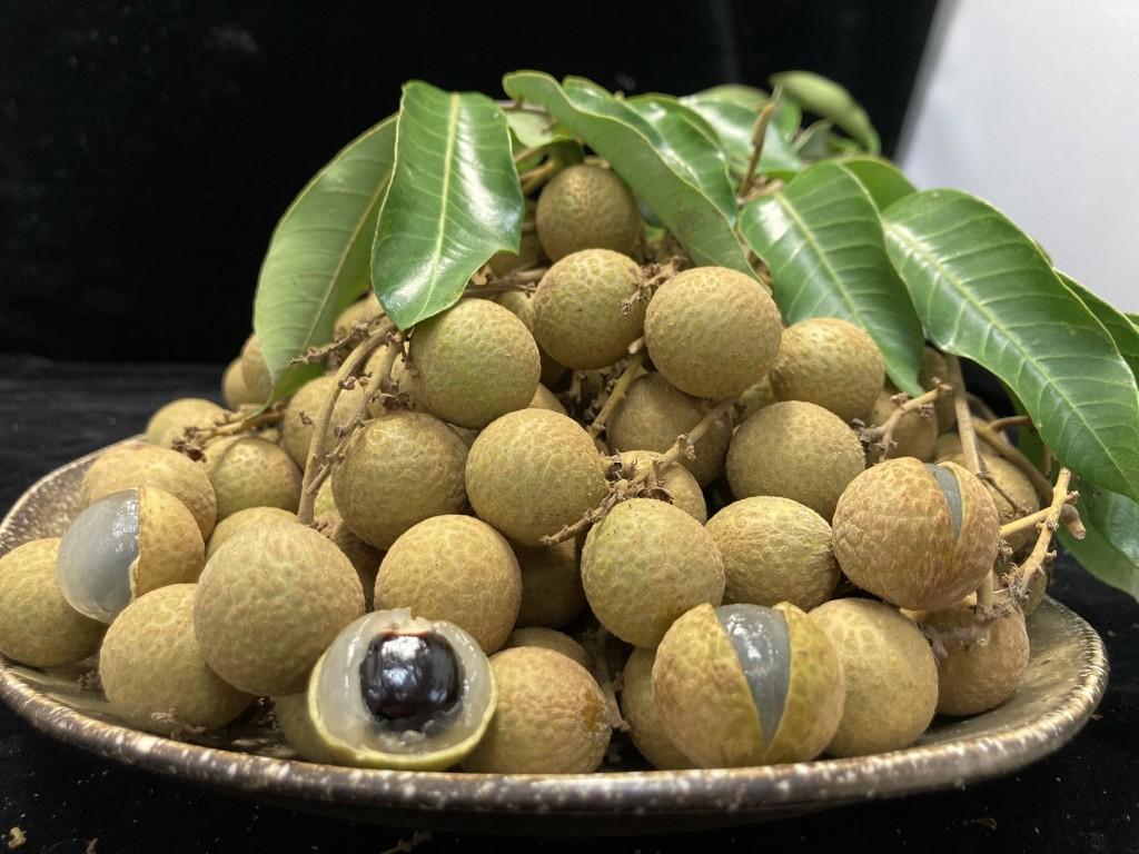 龍眼品種多 台南區農業改良場:甜蜜滋味眾人愛