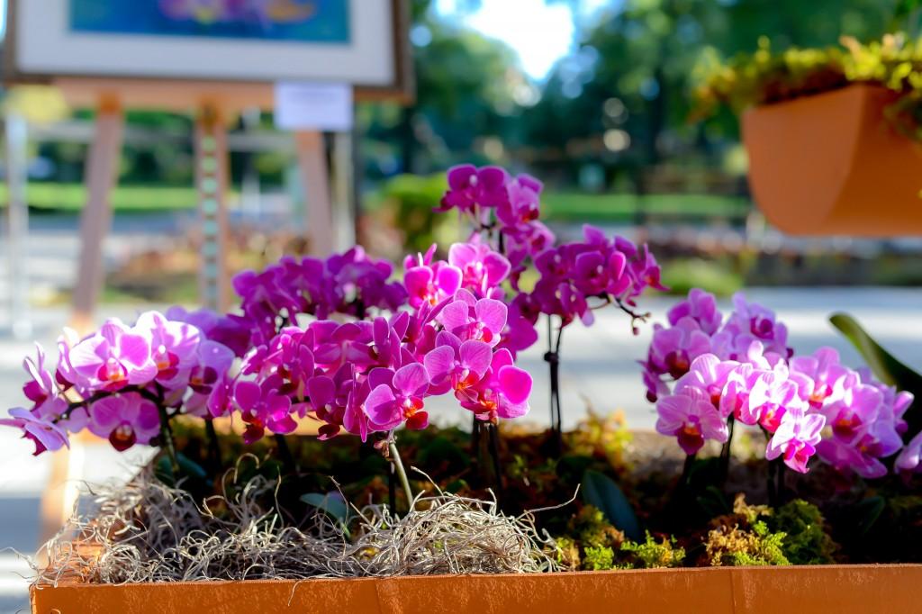 台灣駐紐約辦事處8月13日到15日舉辦「台灣:蘭花世界」特展。(圖/皇后區植物園推特)