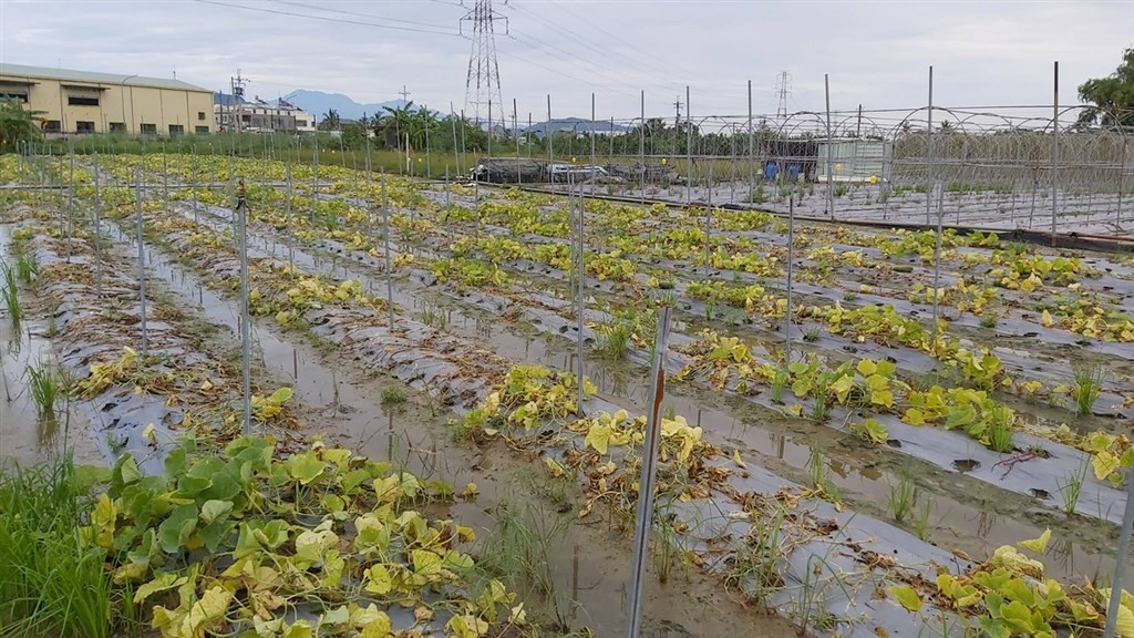 Flooded field in Kaohsiung. (CNA photo)