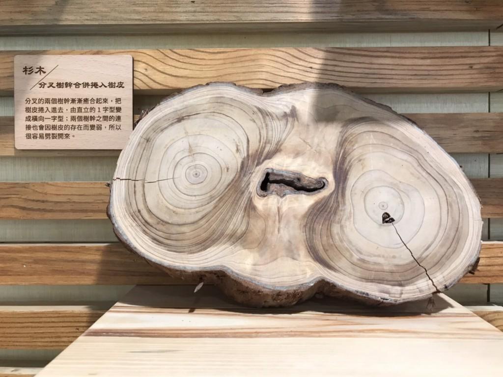 瞭解樹木內部的秘密 有助推廣臺灣樹木身體語言教育