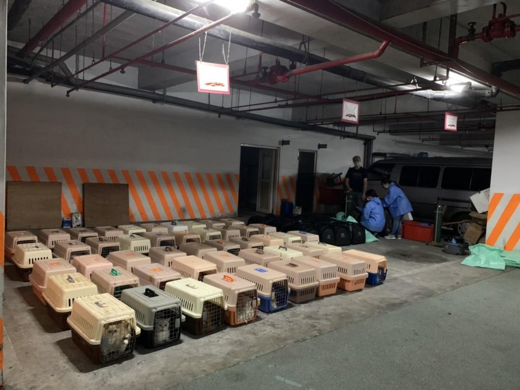 Smugglers hid 154 rare cats inside a ship (CNA, CGA photo).