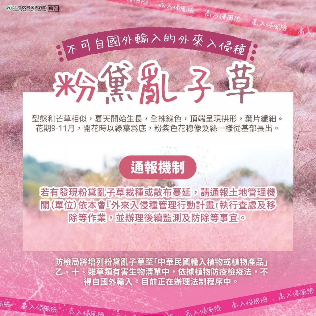 【更新】如夢似幻「粉黛亂子草」屬外來入侵種 台灣南投縣府要求集集業者1週內移除•否則開罰