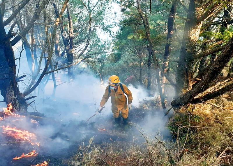 Five hikers could face a total of NT$228 million in compensation claims for last May's Yushan forest fire (CNA, Forestry Bureau photo).