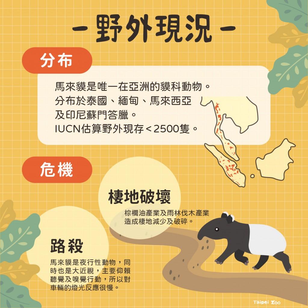 【最新】台北市立動物園新生馬來貘女娃命名投票 結果出爐!