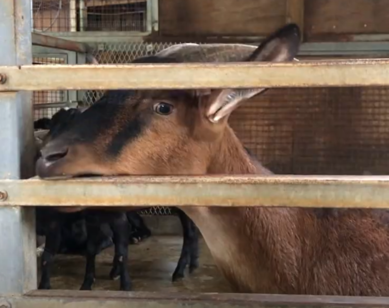 South Taiwan ranch accused of animal abuse, banned from animal performances
