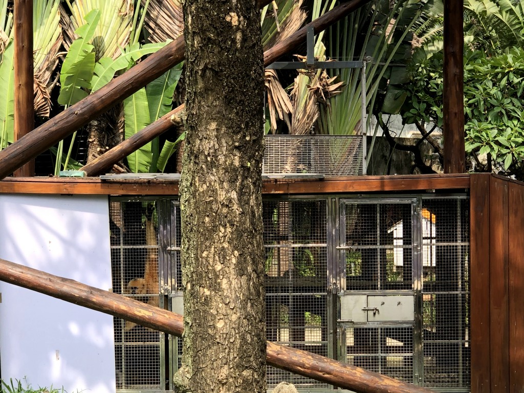 Caged gibbons. (Taiwan Animal Equality Association photo)