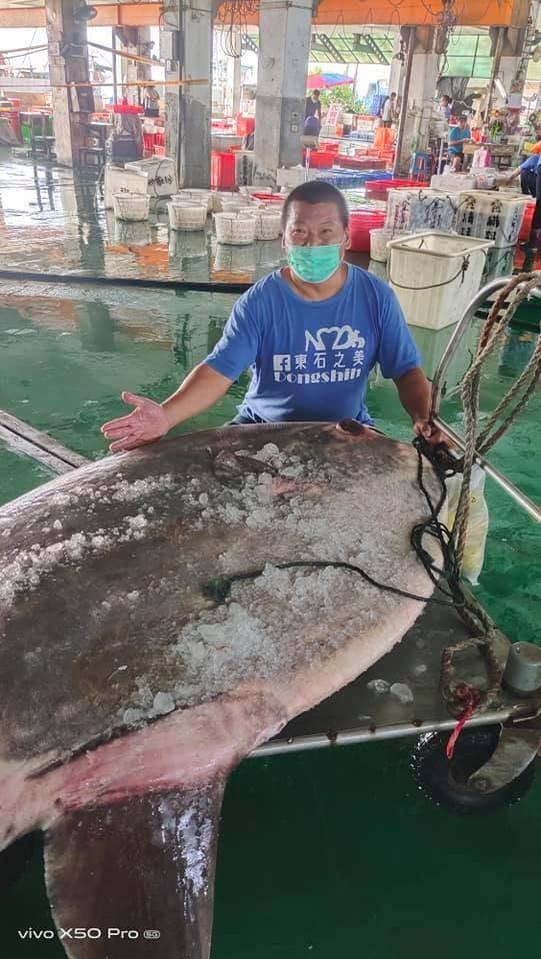 Gigantic ocean sunfish caught in Taiwan Strait