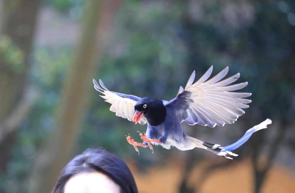 Photo of the Day: Taiwan magpies live up to fierce reputation on stimulus vouchers