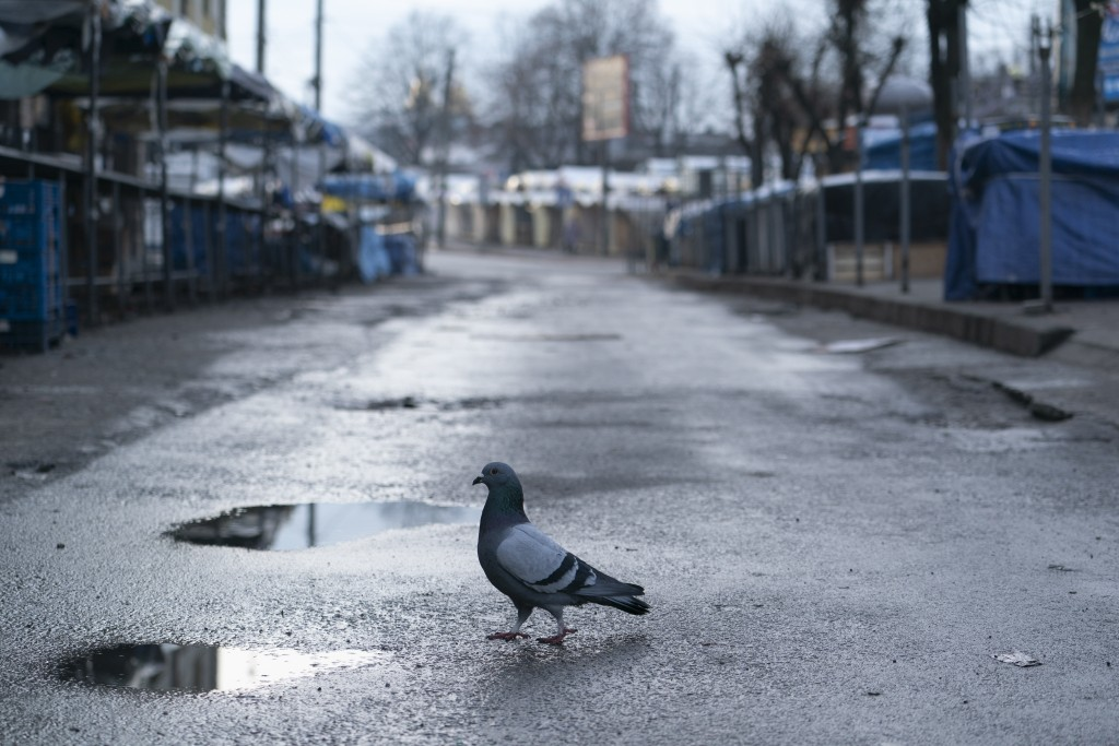 A pigeon at a closed street market in Ivano-Frankivsk, Western Ukraine, Friday, Jan. 8, 2021. Ukraine imposes a wide-ranging lockdown beginning Friday...