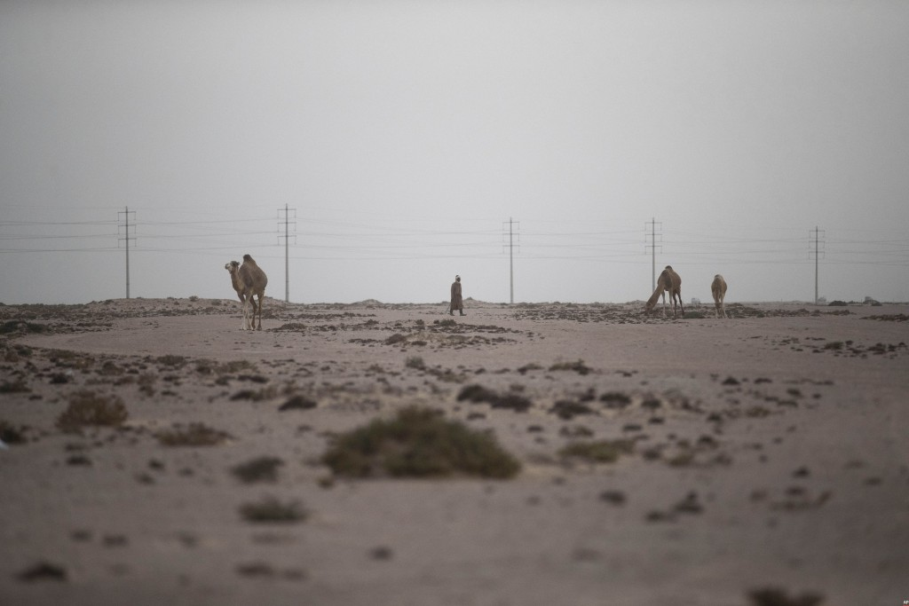 A shepherd walks with his camels in the desert on the outskirts of Dakhla city, Western Sahara, Monday, Dec. 21, 2020. U.S. plans to open a consulate ...