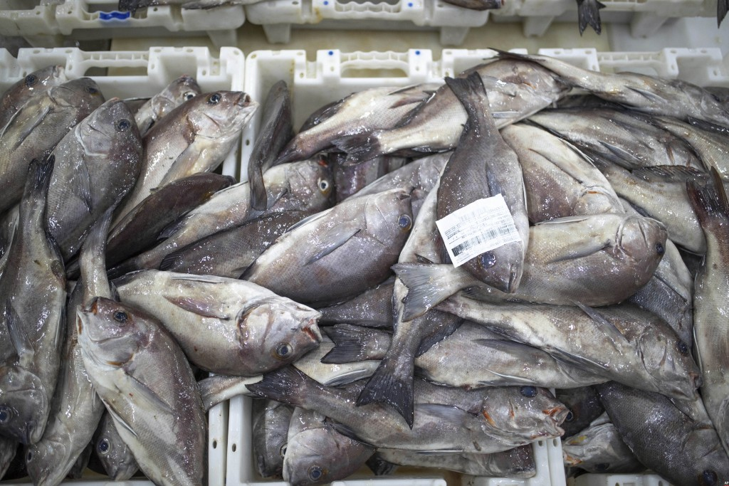 Fish is displayed for merchants inside the main port in Dakhla city, Western Sahara, Monday, Dec. 21, 2020. U.S. plans to open a consulate in Western ...