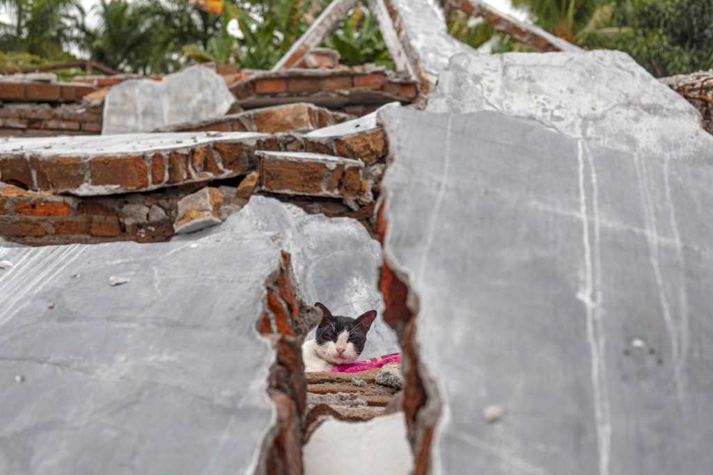 A cat is seen through the rubble of a house badly badly damaged by earthquake in Mamuju, West Sulawesi, Indonesia, Tuesday, Jan. 19, 2021. Aid was rea...
