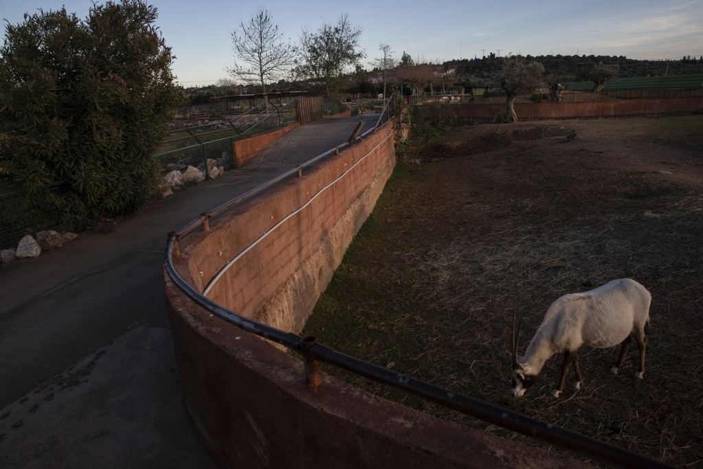 An Arabian oryx stands in an enclosure at Attica Zoological Park, Spata, near Athens, on Thursday, Jan. 21, 2021. After almost three months of closure...