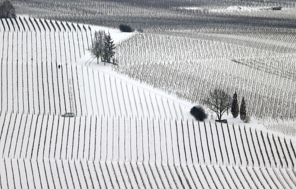 A person walks through a snow-covered vineyard at the Mainschleife area near Nordheim, Germany, Monday, Feb. 8, 2021. Parts of Germany are hit by stro...