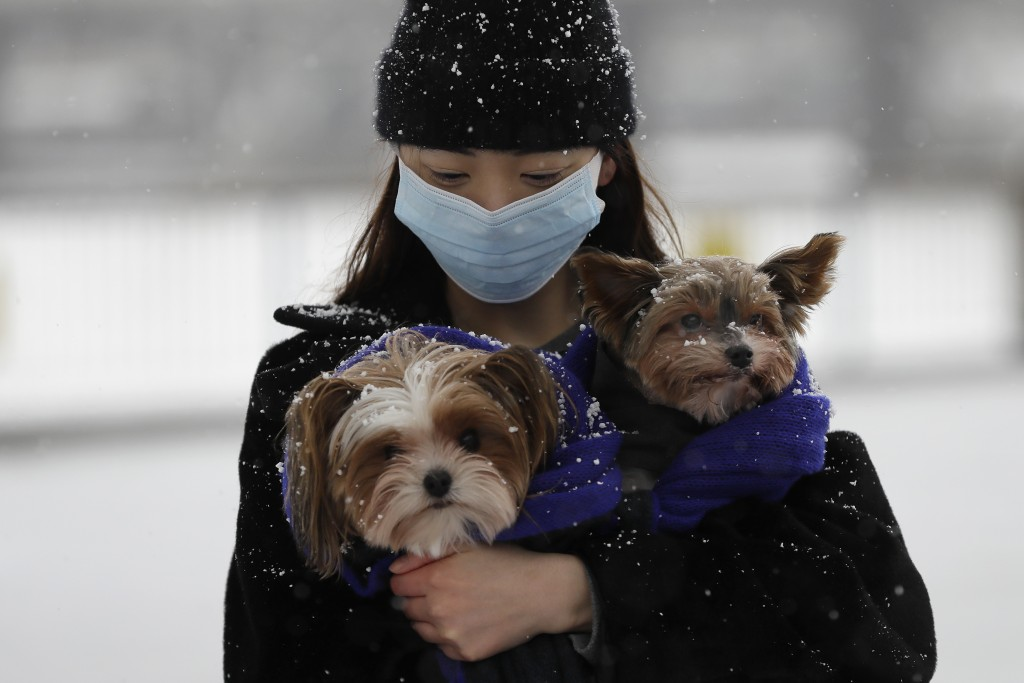 A woman holds her dogs during a snow flurry as temperatures dropped below freezing during the third coronavirus lockdown in London, Tuesday, Feb. 9, 2...