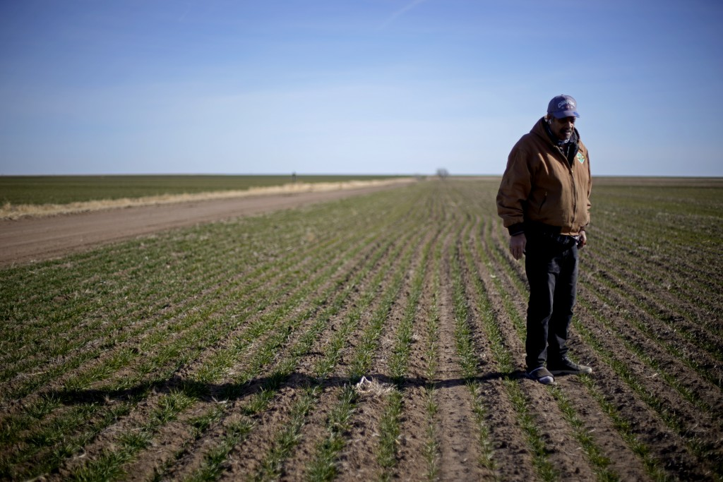 FILE - In this Jan. 13, 2021 file photo, Rod Bradshaw stands in a field of wheat on his farm near Jetmore, Kan. President Joe Biden's nomination of To...