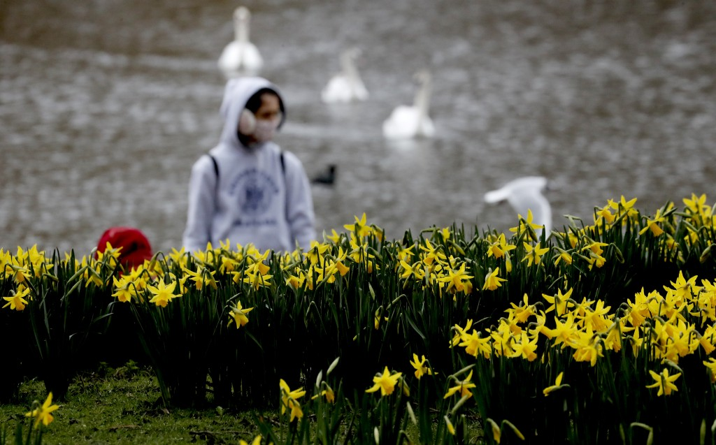 A pedestrian wearing a face covering due to the Covid-19 pandemic walks past blooming daffodils in a park in London, Friday, Feb. 19, 2021 as the lock...