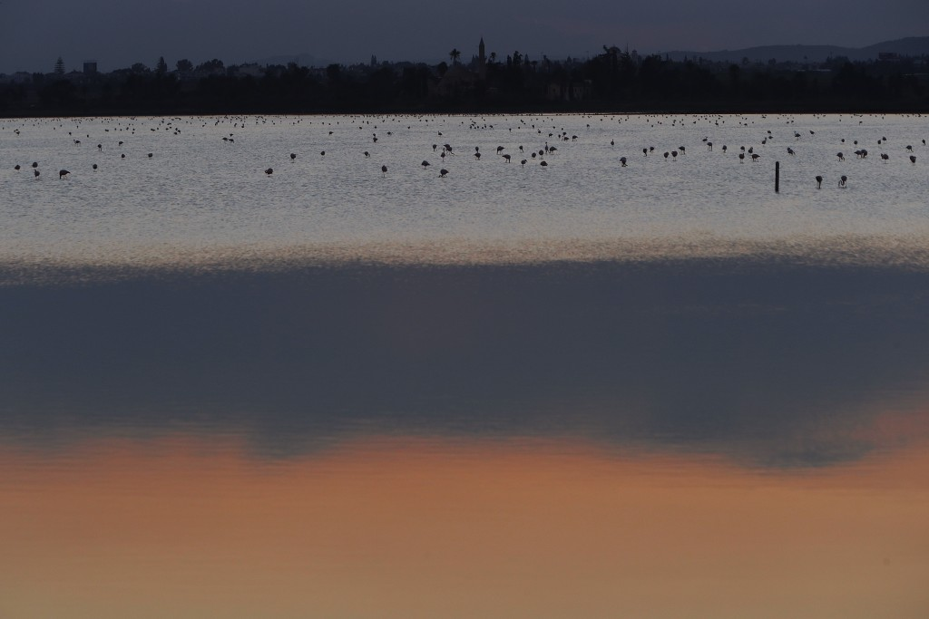 Flamingos search for food at a salt lake in the southern coastal city of Larnaca, in the eastern Mediterranean island of Cyprus, Thursday, Dec. 28, 20...