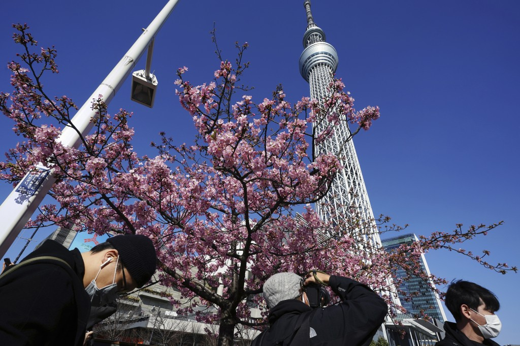People wearing protective masks to help curb the spread of the coronavirus look at Kawazu cherry blossoms near the Tokyo Skytree, the tallest structur...