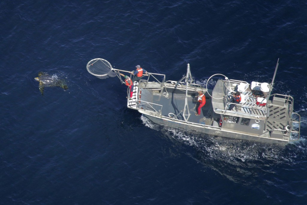 In this aerial photo provided by Joel Schumacher, scientists in a research boat pursue a Pacific leatherback turtle in the Pacific Ocean off Californi...