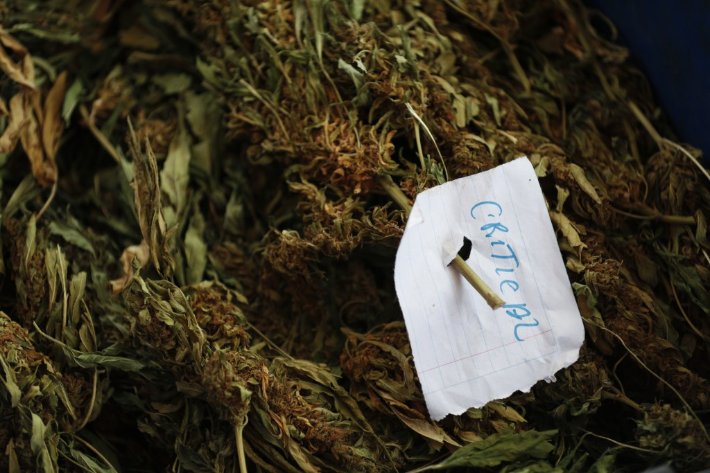 """A sheet of paper that reads """"Critical"""" classifies a variety of marijuana as it is cleaned and weighed outside a home in the mountains surrounding Badi..."""