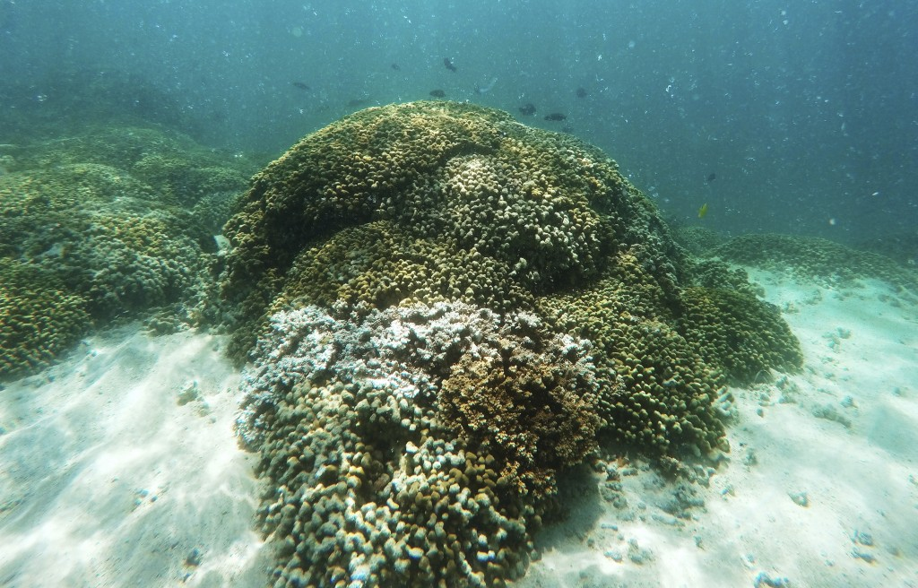 FILE - In this Oct. 26, 2015, file photo, fish swim over coral reef in Hawaii's Kaneohe Bay off the island of Oahu. Flooding in March 2021 in Hawaii c...