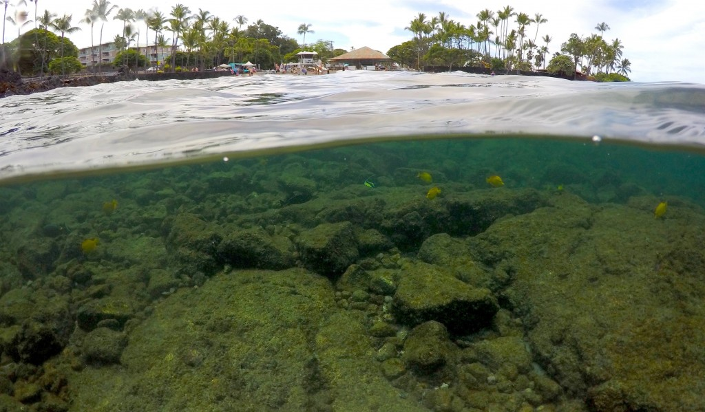 FILE - In this Sept. 12, 2019, file photo, fish swim near coral in Kahala'u Bay in Kailua-Kona, Hawaii. Flooding in March 2021 in Hawaii caused widesp...