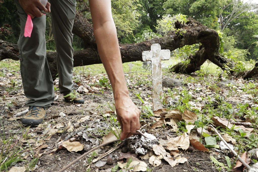 Dumas Galvez, a researcher of the Smithsonian Tropical Research Institute, leaves oats for ants at the French Cemetery in Paraiso, Panama, Tuesday, Ma...