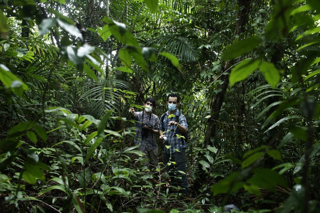 Biologists Claudio Monteza, right, and Pedro Castillo, look for a place to install a camera in a dense tropical rainforest in San Lorenzo, Panama, Tue...