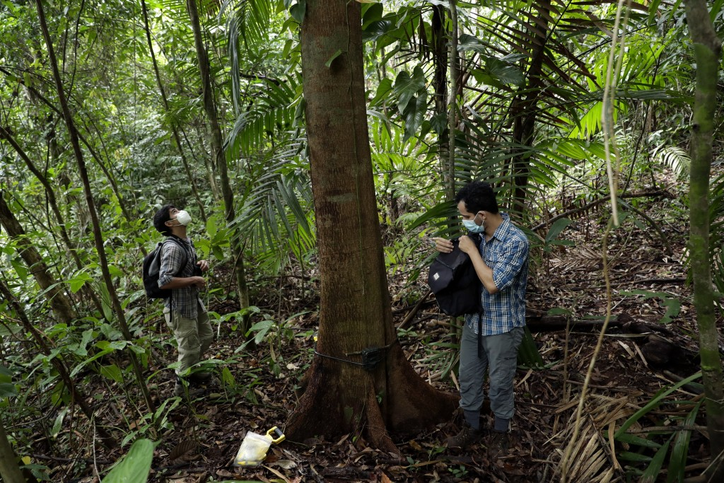 Biologists Claudio Monteza, right, and Pedro Castillo install a remote camera trap on a tree in the rainforest in San Lorenzo, Panama, Tuesday, April ...