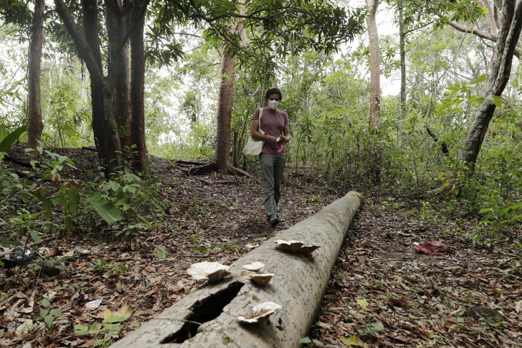 Dumas Galvez, a researcher of the Smithsonian Tropical Research Institute, walks in a forest searching for ants, near his home in Paraiso, Panama, Tue...