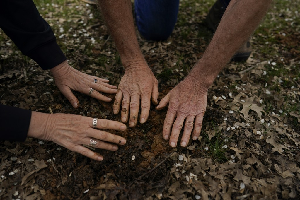After returning the cicada nymphs where they found them, University of Maryland entomologists Michael Raupp and Paula Shrewsbury gently pat the dirt o...