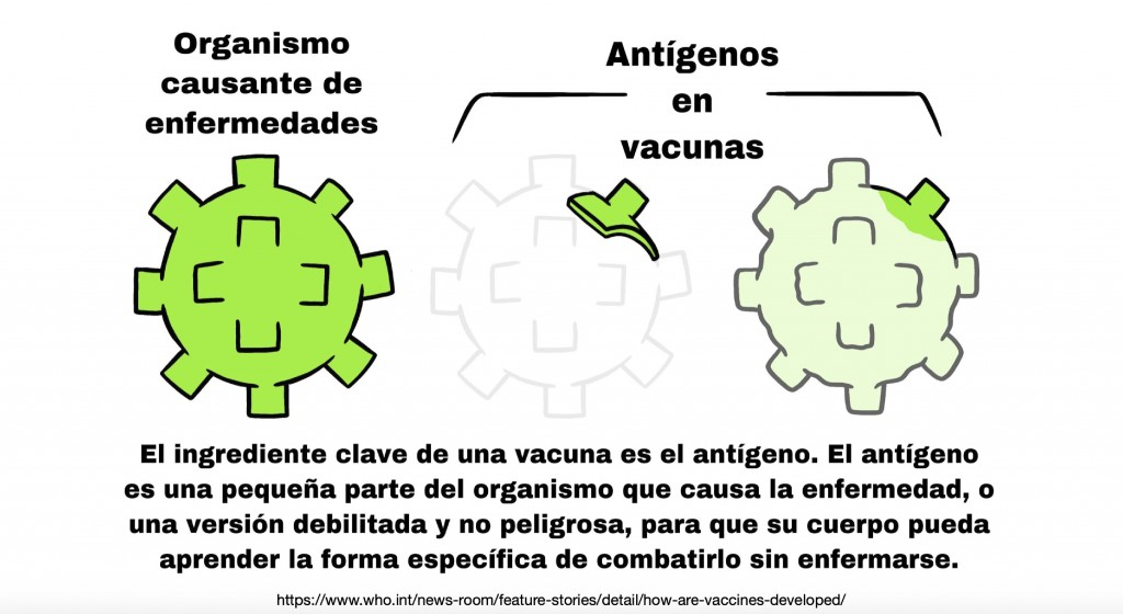 This illustration provided by LaGuardia Community College, shows a Spanish-language diagram explaining the function of antigens in vaccines, which is ...